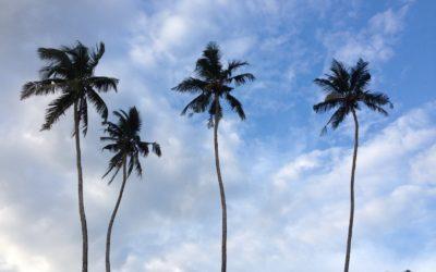 CZ: Šrí Lanka – co a jak? Kapitola 1.